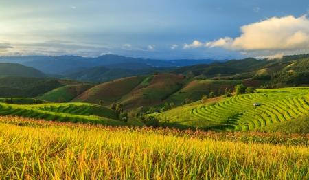 Rice terasz Thaiföldön Stock fotó