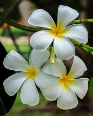 spa virág virágzó