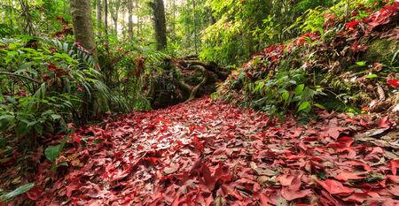 Maple leaf in jungle