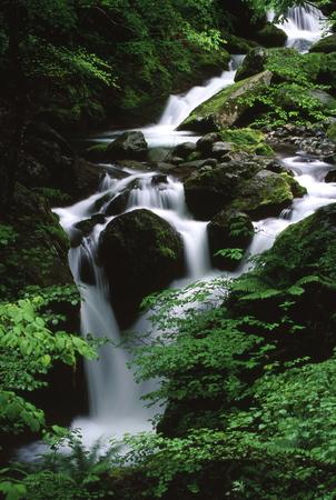 新緑の渓流 写真素材
