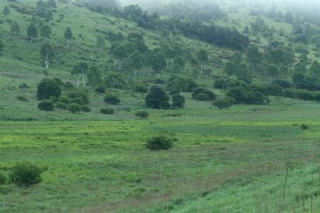 高原の夏 写真素材 - 75823857