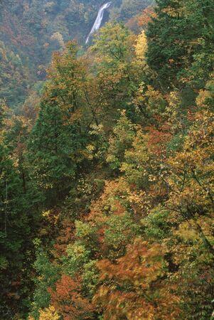 紅葉と滝 写真素材