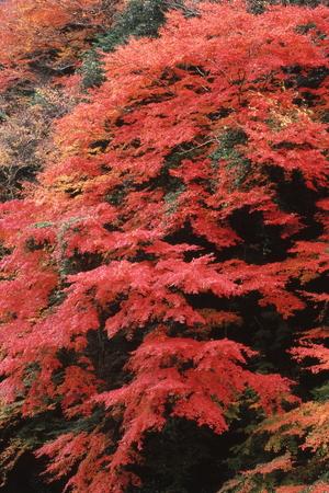 秋の色 写真素材 - 76132673