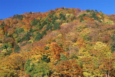 秋山 写真素材