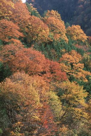 秋の木立の他 写真素材