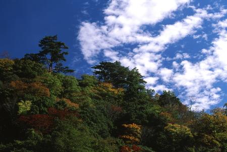 秋晴れの良いお天気