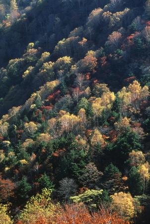 晩秋の丘 写真素材 - 76132721