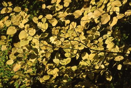 秋の色 写真素材 - 76132726