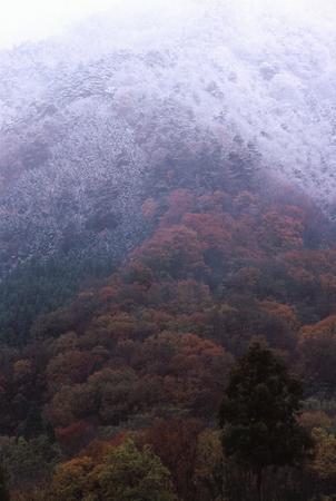 雪の晩秋 写真素材