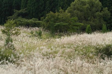 秋のフィールド 写真素材 - 76387814