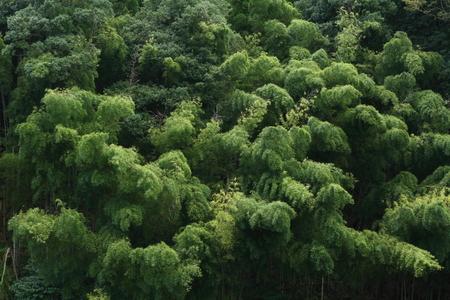 秋の竹林 写真素材 - 76387815