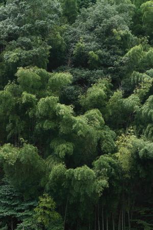 秋の竹林 写真素材 - 76387818