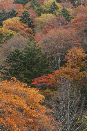 Colored leaves of coppice 写真素材
