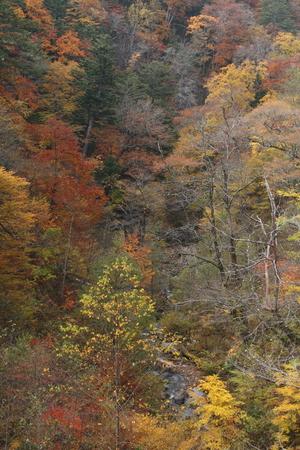 秋の渓谷 写真素材