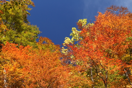 秋晴れの良いお天気 写真素材 - 76387835
