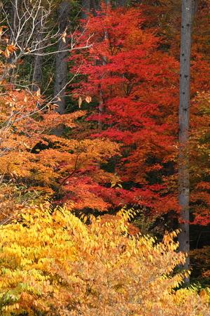 秋の色 写真素材 - 76387837
