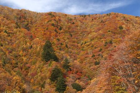 紅葉の山 写真素材 - 76387840