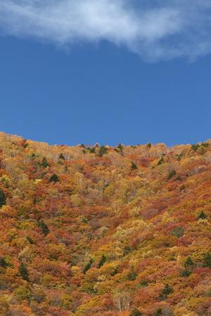 紅葉の山 写真素材 - 76387843