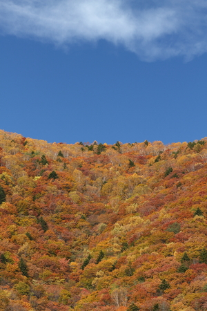 Mountain of colored leaves