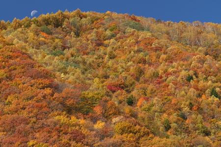 紅葉の山 写真素材 - 76387844