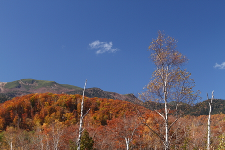 秋の乗鞍高原 写真素材 - 76387845