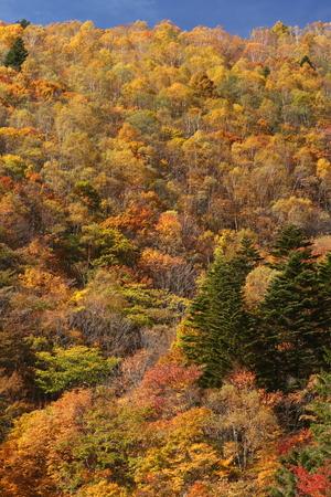 紅葉の山 写真素材 - 76387847
