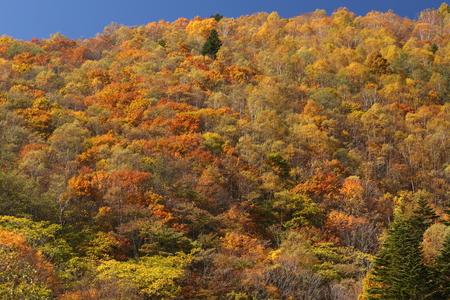 紅葉の山 写真素材 - 76387849