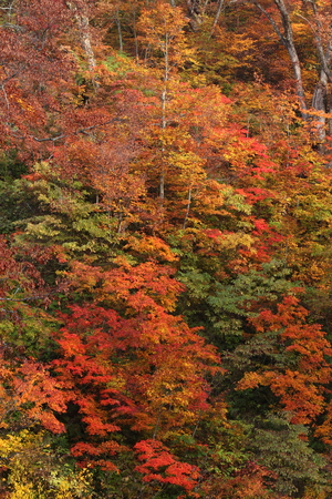 Forest of colored leaves 写真素材