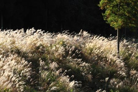 秋のフィールド 写真素材 - 76387863