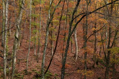 遅い秋の雑木林