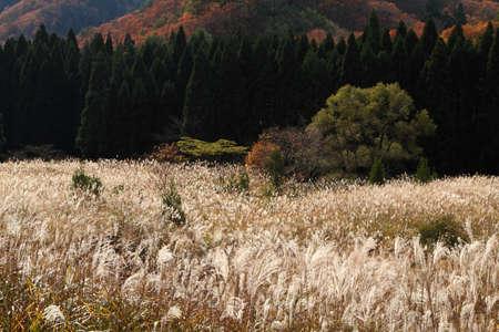 秋のフィールド 写真素材