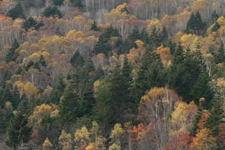 秋の雑木林 写真素材