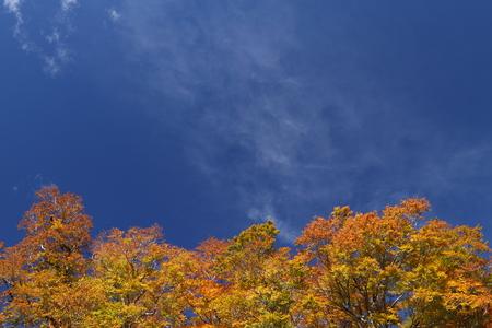 澄んだ秋空 写真素材 - 76329279
