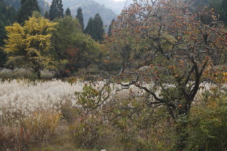 秋の山里 写真素材 - 76389086