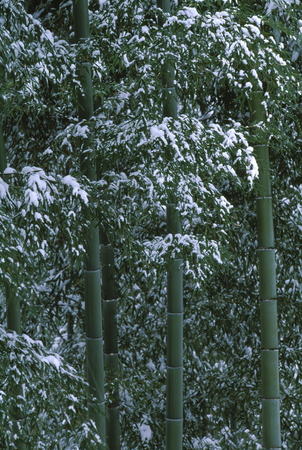 竹と雪 写真素材