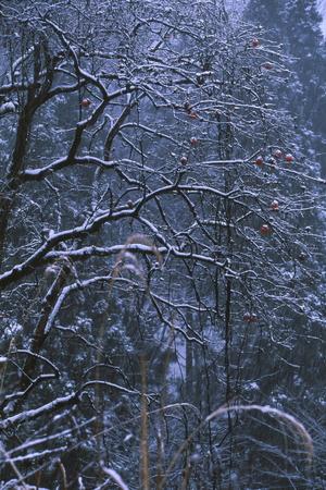 冬枯れの景色