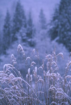 冬のフィールド