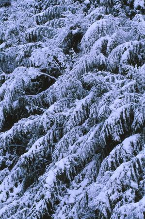 雪の竹林 写真素材 - 76389092