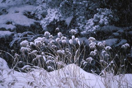 リバーサイドの雪