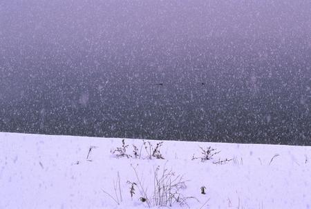 雪に覆われた海岸