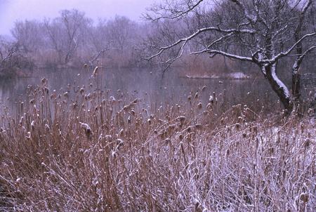 雪の琵琶湖湖岸