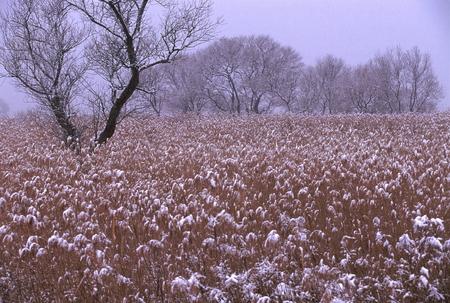 雪の琵琶湖湖岸 写真素材 - 76135199