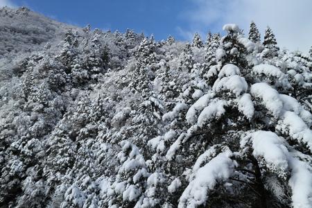 雪に覆われた雑木林