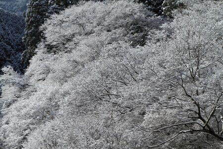 雪のように花の花弁