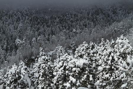 冬の森 写真素材 - 76147682