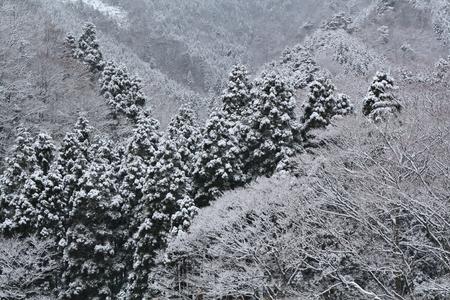 雪のコーティング