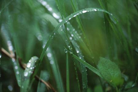 一滴の水 写真素材