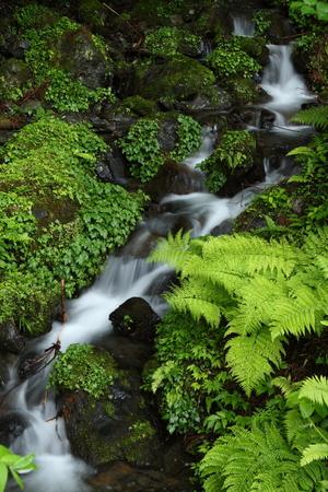 初夏の渓流 写真素材