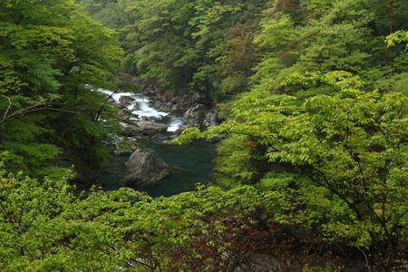 新緑の渓谷 写真素材
