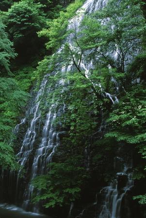 Ryuusougataki 写真素材